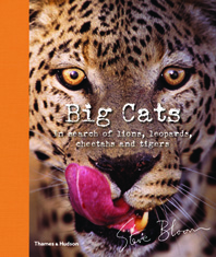 Big Cats: In Search of Lions, Leopards, Cheetahs, and Tigers Cover
